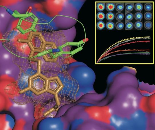 Inhibitors of dimerization of  ErbB tyrosine-kinase transmembrane receptors